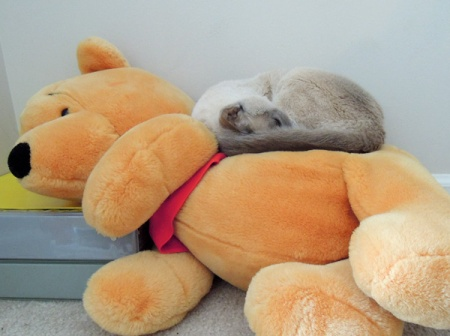 Bella and Pooh